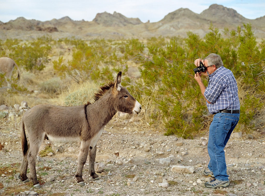 Dad and Donkey