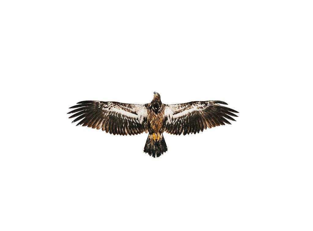 Eagle Welcome