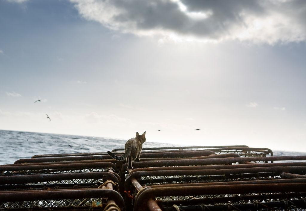 Sea Kitty's Journey
